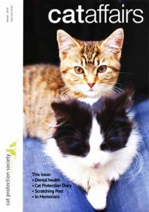 Cat Dental Health Article