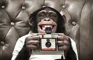 Chimp Photography