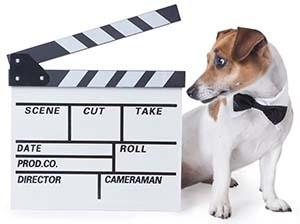 Vet Endorsed Dog Pet Advertising