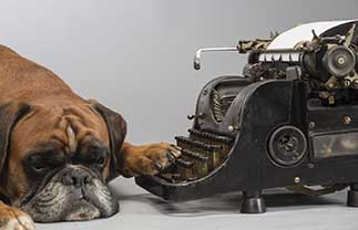Typewriter Dog