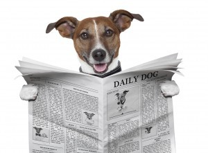 Vet Print Dog Reading Newspaper
